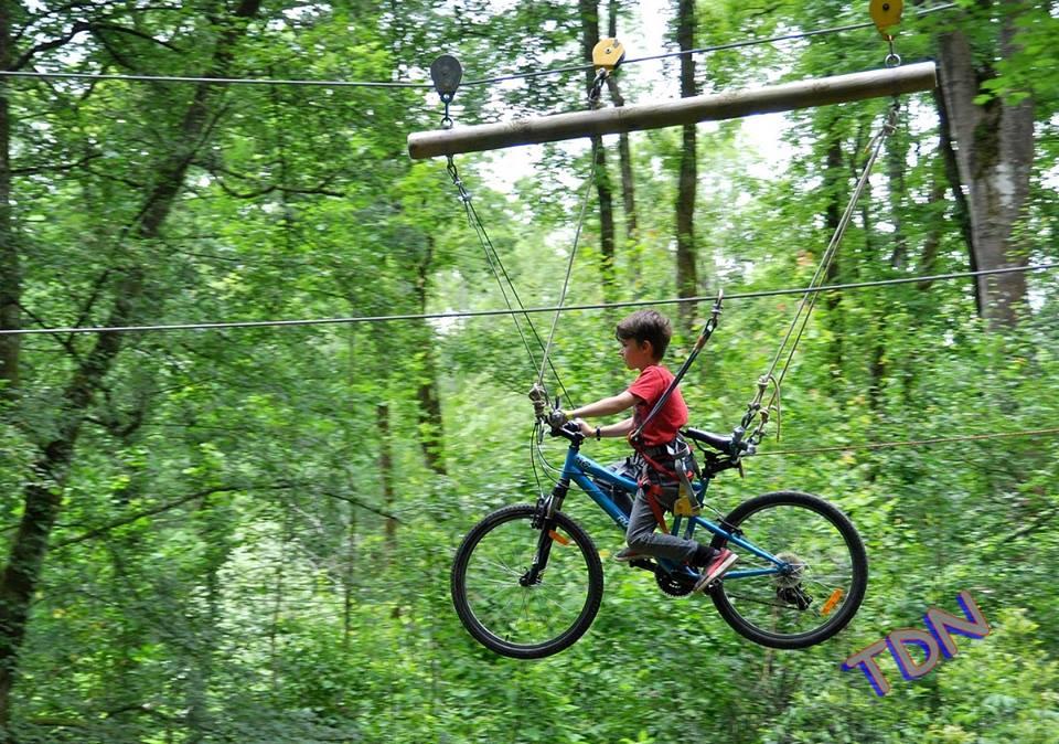 vélo dans les arbres